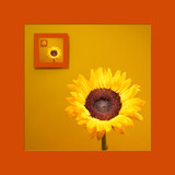 portrait of sunflower poster