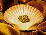 gold on the half shell poster