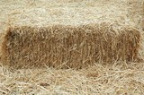 hay stack poster