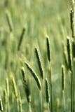 rural denmark poster