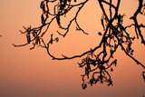 branches morning poster