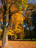park in autumn gown poster