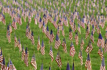 us flags in field