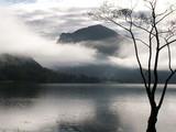 misty lakeside tree poster