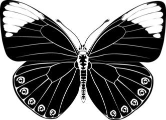 butterfly black  fantasy