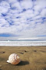 concha y playa