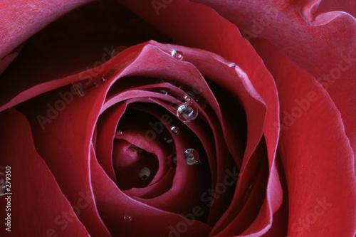 Leinwanddruck Bild scarlet passion