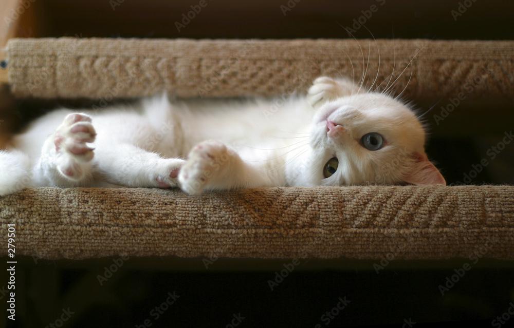 Biały kociak bawi się na kanapie - powiększenie