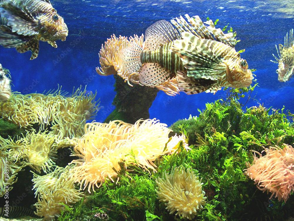 kolor akwarium woda - powiększenie