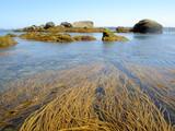 algues de grandes marees poster