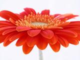 pretty in orange poster