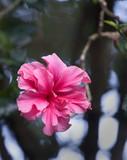 tropical flower, haiku gardens poster