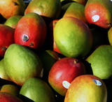 mangos for sale