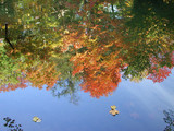 fall colours reflection poster