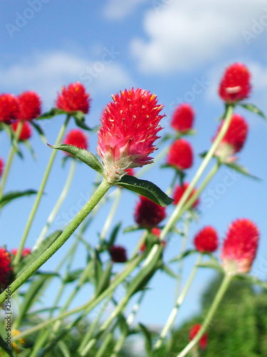 poster of red flower with full of vitality