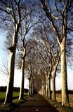 route et arbres poster
