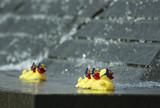 rubber ducks poster