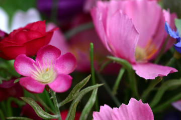flower in cemetary