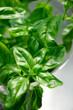 fresh basil spice