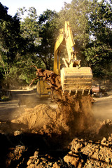 excavator removing tree stump