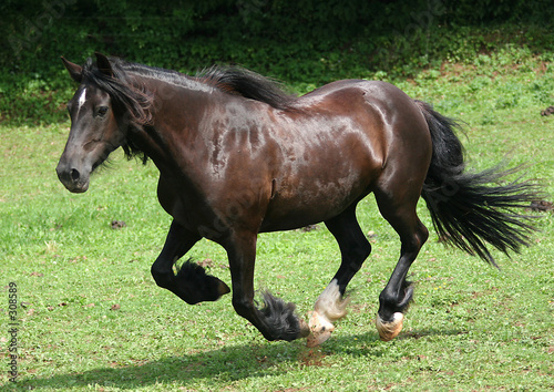 Fototapeten,pferd,pferd,schwarz,sommer
