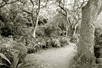 rainforest--at the waimea valley audubon center on oahu, hawaii
