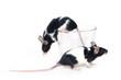 Leinwanddruck Bild glass of... mice