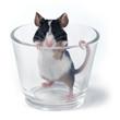 Leinwanddruck Bild glass of... mouse