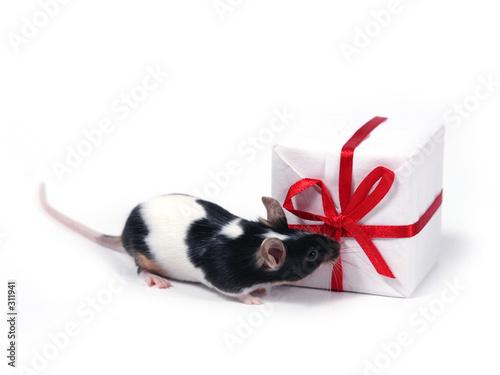 Leinwandbild Motiv finding a present