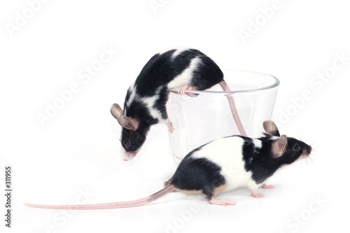 Leinwandbild Motiv glass of... mice