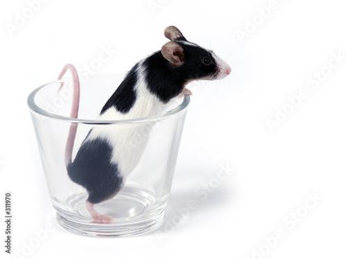 Leinwanddruck Bild mouse in a glass