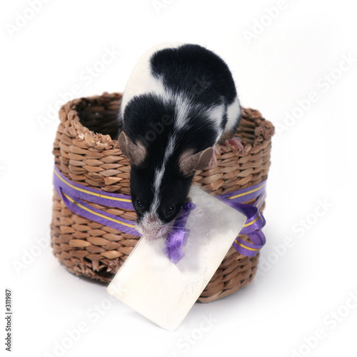 Leinwanddruck Bild mouse in a basket with a card