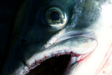 macro fish poster