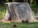 tree stump poster