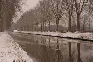 alignement d'arbres en hiver