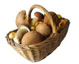 basket full of mushrooms poster