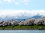 japanese spring landscape poster