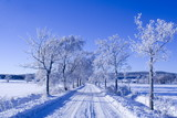 winter way poster