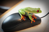 frog on mouse poster