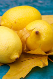 yellow citric still-life poster