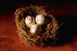 bird's nest poster