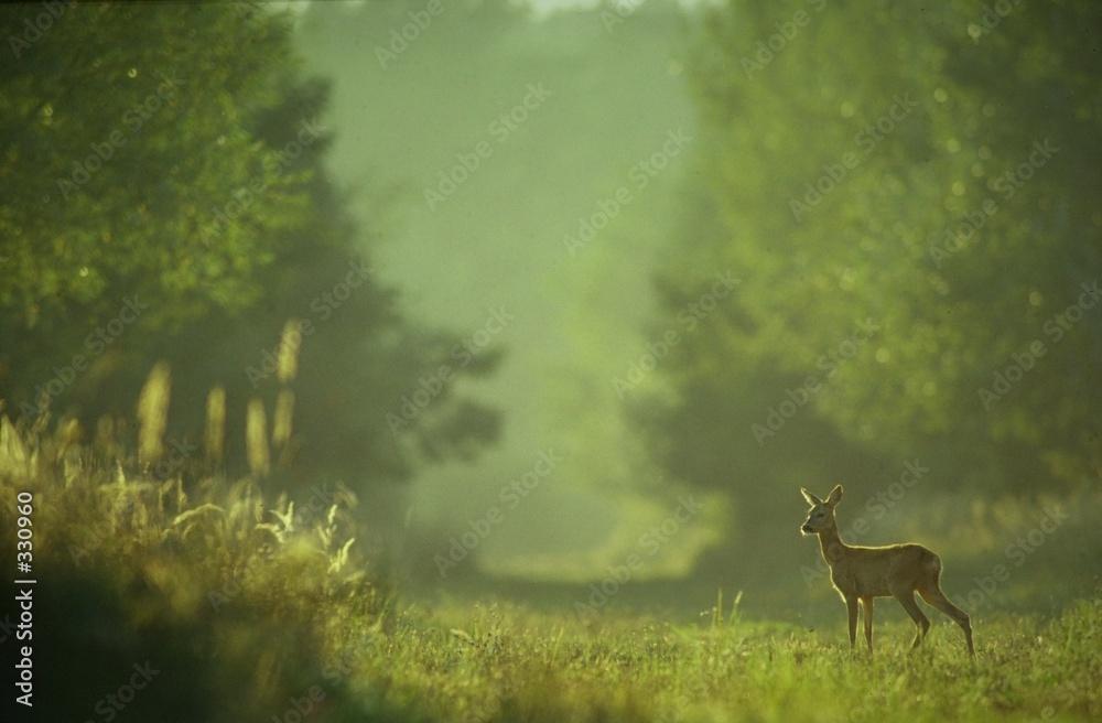 zwierzę las natura - powiększenie