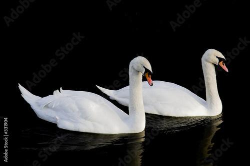 Fotobehang swans