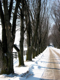 winter tree lined lane 3 poster