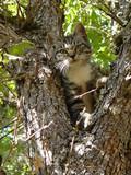 gray tabby cat in tree poster
