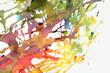 Quadro colour explosion