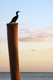 bird on pole poster