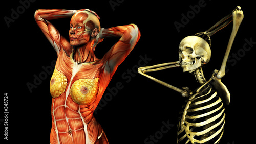 bone and muscle