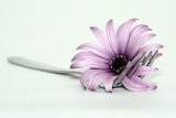 fork and flower poster