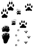 paw prints - animal tracks w/ working path 150 dpi poster